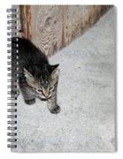 Tough Barn Kitten Spiral Notebook