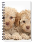 Toy Labradoodle Puppies Spiral Notebook