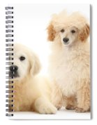 Toy Poodle And Golden Retriever Spiral Notebook
