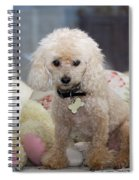 Toy Poodle Spiral Notebook