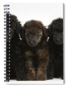 Toy Poodle Pups Spiral Notebook