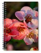Toyo Nishiki Quince Spiral Notebook