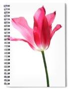 Translucent Pink Tulip Flower  Spiral Notebook