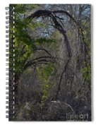Tree Abstract  Spiral Notebook