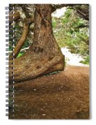 Tree And Trail Spiral Notebook