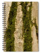 Tree Bark Mossy 4 C Spiral Notebook
