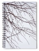 Tree Branch Nature Abstract Spiral Notebook