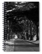 Tree Canopy Promenade Road Drive . 7d9977 . Black And White Spiral Notebook