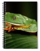 Tree Frog 1 Spiral Notebook
