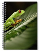 Tree Frog 2 Spiral Notebook