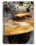 Tree Fungus 1 Spiral Notebook