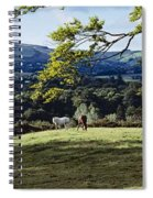 Tree In A Field, Great Sugar Loaf Spiral Notebook