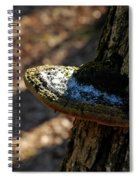 Tree Shelf Snow Sprinkled Fungus Spiral Notebook