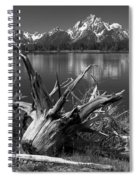 Tree Stump On The Shore Of Lewis Lake At Yellowstone Spiral Notebook