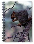 Tree Top Nut Spiral Notebook