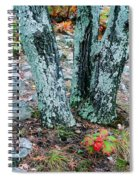 Tree Trio In Lichen At Hawn State Park Spiral Notebook