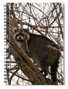 Treed  3331 Spiral Notebook