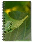 Treefrog Resting Spiral Notebook