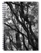 Trees Beautiful Trees Spiral Notebook