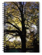 Trees During Autumn Spiral Notebook