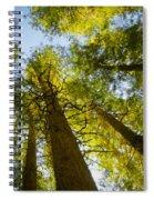 Trees Of Devoto Spiral Notebook