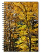 Trees Of Gold Spiral Notebook