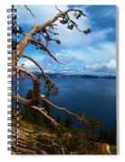 Trees On The Crater Spiral Notebook