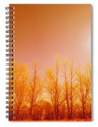 Trees With Sunlight Spiral Notebook