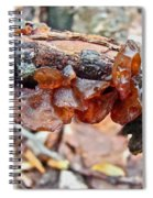 Tremella Mesenterica - Reddish Brown Brain Fungus Spiral Notebook