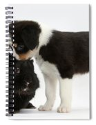Tricolor Border Collie Pup With Black Spiral Notebook