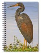 Tricolor Heron Spiral Notebook