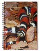 Tricolor Hognose Snake Spiral Notebook