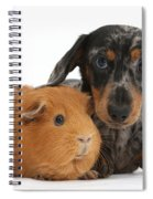 Tricolor Merle Dachshund Pup And Red Spiral Notebook