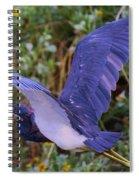 Tricolored Heron In Flight Spiral Notebook