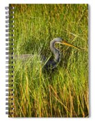 Tricolored Heron Spiral Notebook