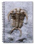 Trilobite Spiral Notebook