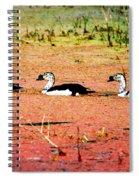 Trio Of Ducks Spiral Notebook