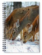Triple Play Spiral Notebook
