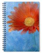 Triptych Gerbera Daisy-one Spiral Notebook