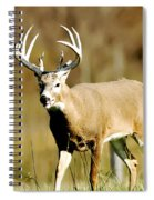 Trophy Buck Spiral Notebook