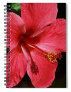 Tropical Beauty Of Florida Spiral Notebook