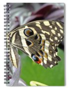 Tropical Butterfly Spiral Notebook