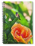 Tropical Hummer Spiral Notebook