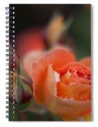 Tropical Orange Spiral Notebook