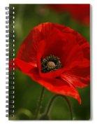 Truly Red Oriental Poppy Wildflower Spiral Notebook