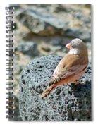 Trumpeter Finch Spiral Notebook