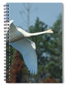 Trumpeter Swan In Flight Spiral Notebook