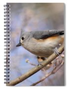 Tufted Titmouse - On The Slope Spiral Notebook