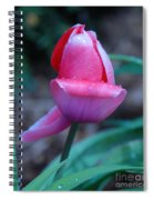 Tulip After The Rain Spiral Notebook
