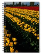Tulip Fields Forever Spiral Notebook